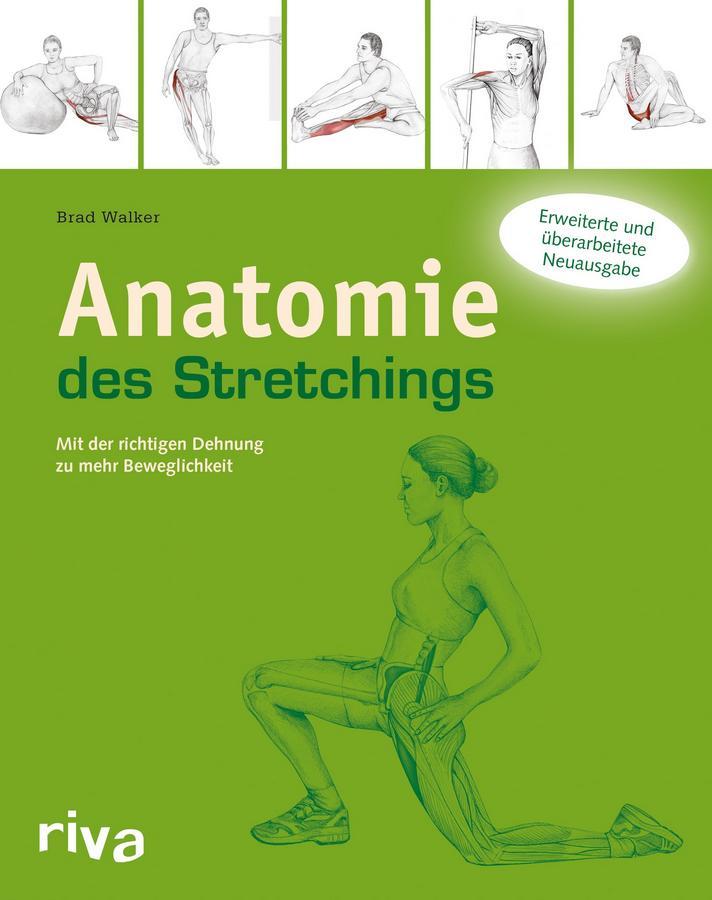 Physiologie: Der Aufbau und die Funktion der Skelettmuskulatur ...