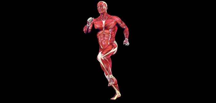 So wichtig sind Muskeln für die Ausdauer: Traingsaufbau und Trainingspläne für das Ausdauertraining