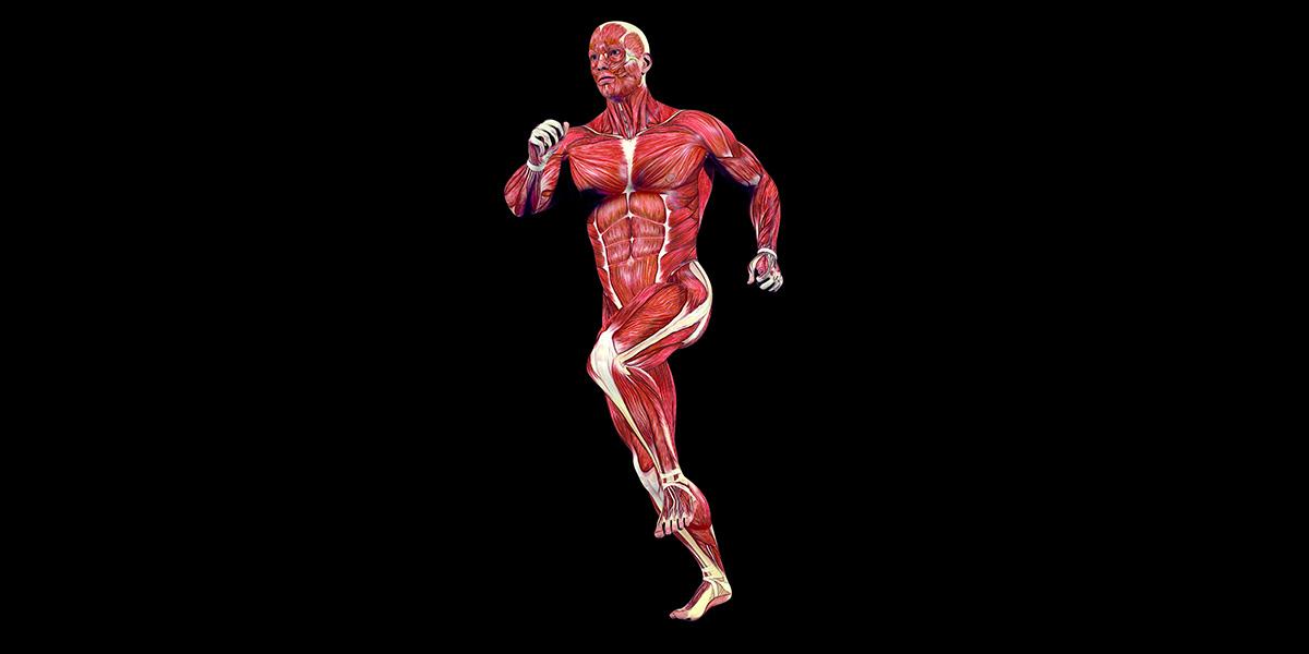 Welche muskeln werden beim joggen beansprucht
