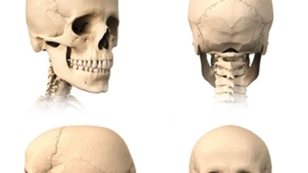 Selbstverteidigung: Anatomie für Kampfsportler (Teil I) - Der Kopf ...