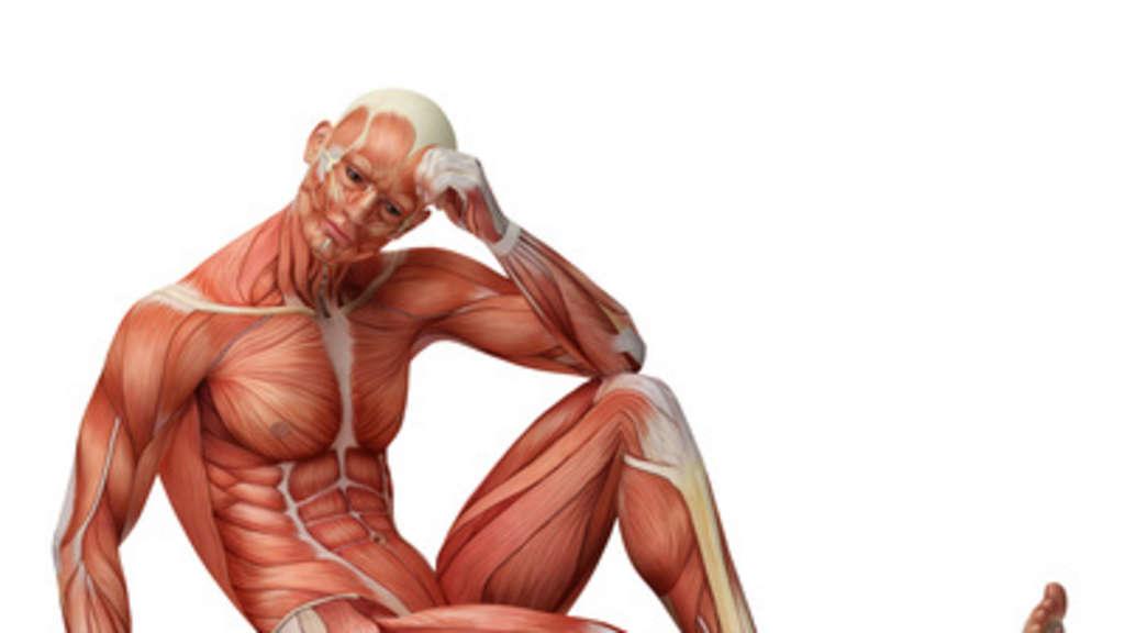 Aufbau & Funktion der Skelettmuskulatur | Ratgeber, Sportwissenschaft