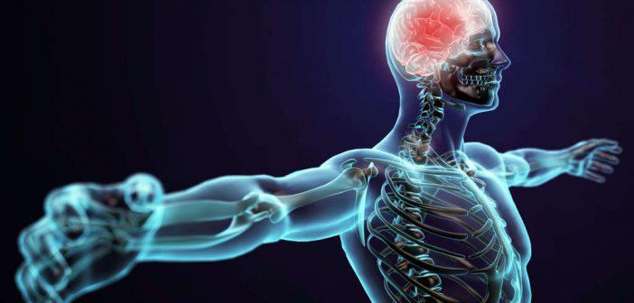 Neuroathletik Training zur Steigerung der mentalen und körperlichen Leistungsfähigkeit! Grundlagen✓ Training✓ Übungen✓ Gehirn✓ Patrick Meinart✓ Ausbildung✓