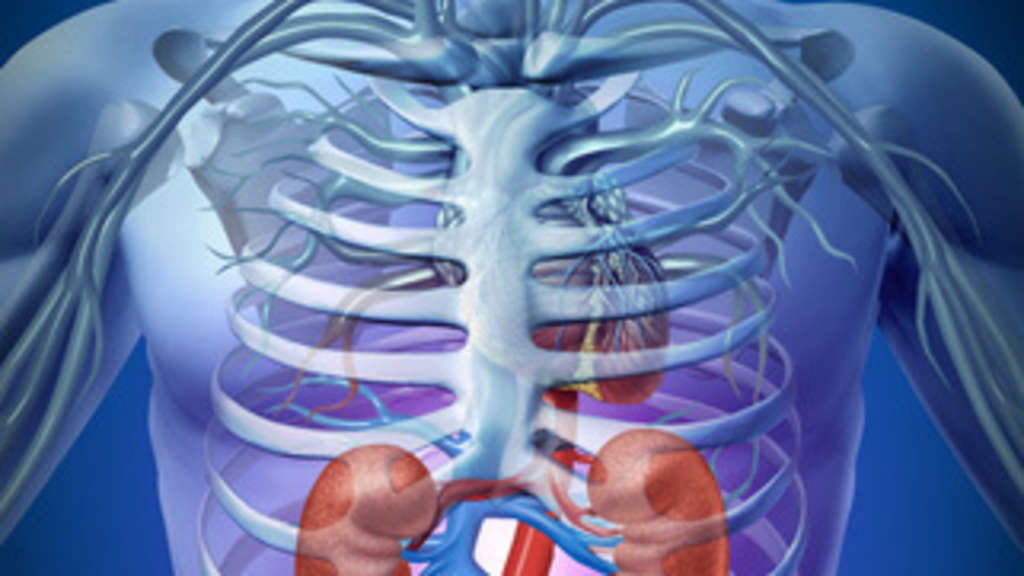 Kann man mit Nierenproblemem Sport machen? | Fitness, Sportmedizin