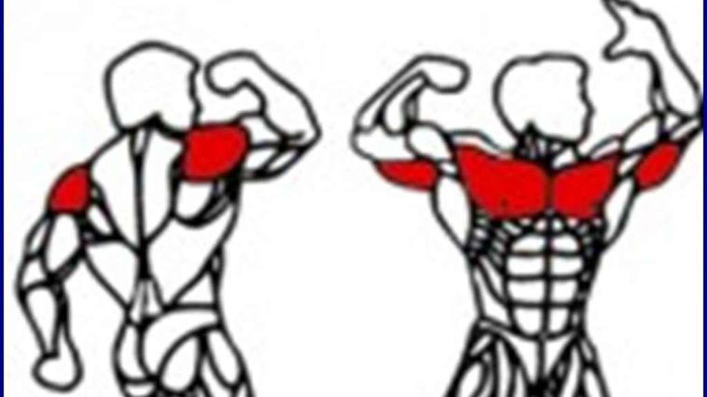 """Brust, Schulter, Trizeps"""" und anderer Unsinn   Functional Training ..."""