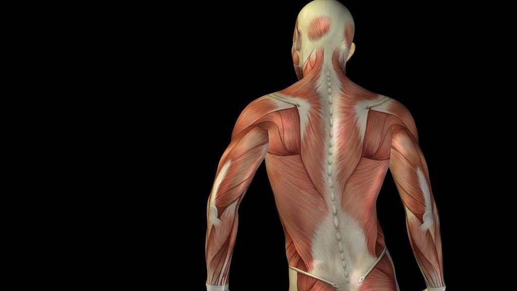ᐅ Die besten Gründe für Faszientraining: stark, beweglich & gesund!