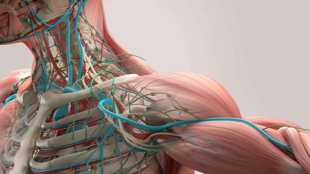 Die Schulter: Ein Grundlagenartikel | Schmerzen, Diagnostik, Ursachen