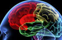 ZNS: Neurowissenschaftliche Erkenntnisse revolutionieren derzeit die Trainingslehre und den Spitzensport