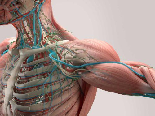 Das Impingement-Syndrom | Schulterschmerzen, Behandlung & Therapie