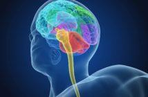 Die wichtigsten neuronalen Steuerungssysteme zur Optimierung der Körperhaltung