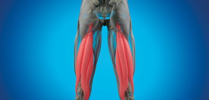 Übungen für starke und gesunde Hamstrings