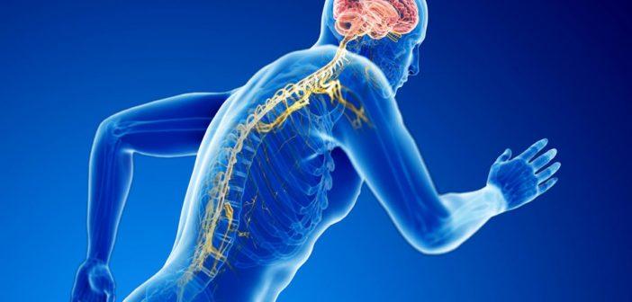 Durch Neuroathletiktraining mehr Leistung im Sport