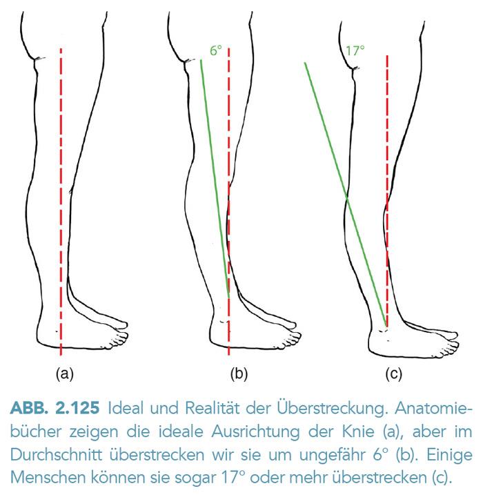Ideal und Realität der Überstreckung. des Knie