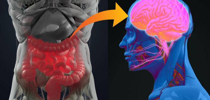 gesundheitstipps für darm und gehirn