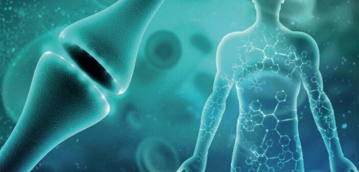 Neurotransmitter: Übersicht, Wirkung, Test, Regeneration, Ratgeber