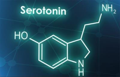 Neurotransmitter Serotonin