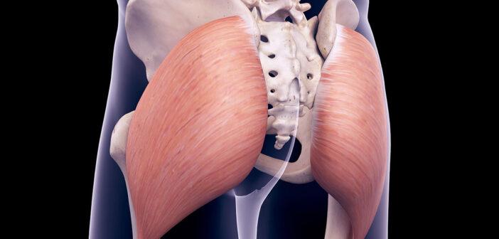 Aufbau und Funktion der Gesäßmuskulatur